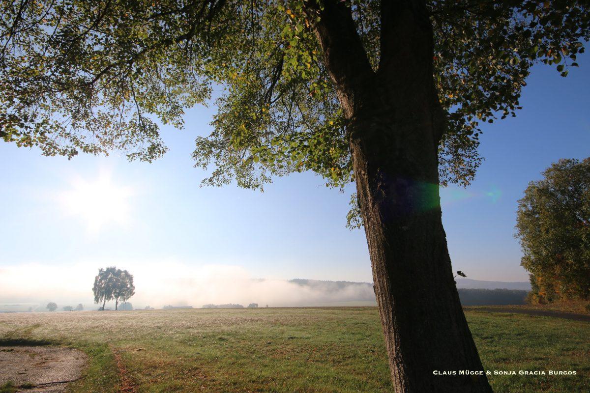 Der Nebel und die Sonne